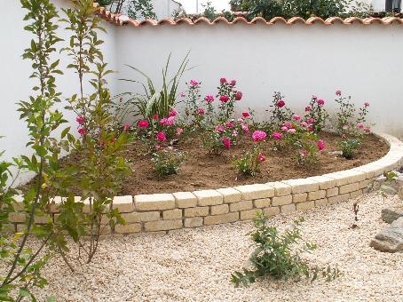 Massif de rosiers for Entretien mini rosier interieur